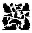 ragdoll cat animal silhouettes vector image vector image