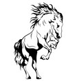 wild horse black and white vector image vector image