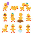 cartoon cute ducks little baby yellow chick vector image vector image