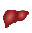 liver anatomy colorful vector image