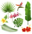tropical plants vector image