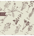 Medical herbs seamless pattern Hand drawn vector image