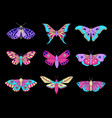 moths and butterflies vector image vector image