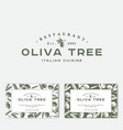 olive tree logo engraving style business card vector image
