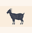 goat vintage logo retro print poster for vector image