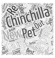 How To Re home Your Chinchilla Word Cloud Concept vector image vector image