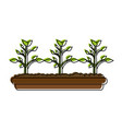 plants in vase vector image