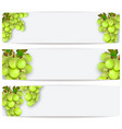 cards or labels with realistic grapes vector image vector image