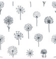 dandelion old plant with seeds monochrome vector image