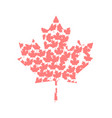 isolated textured maple leaf vector image