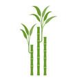 lucky bamboo vector image vector image