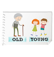 Opposite adjectives with old and young vector image vector image