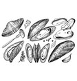 sea mussels in vintage retro style nautical vector image vector image