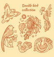 hand drawn bird collection vector image vector image