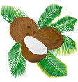 coconuts and palm leaves vector image vector image