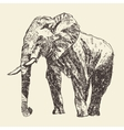 Elephant engraving hand drawn sketch vector image