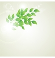 green leaves ecology on lighting background vector image