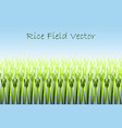with stylized green rice paddy vector image vector image