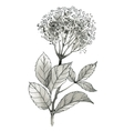 Beautiful hand-drawn monochrome wildflower vector image vector image