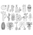 home cactus plants and flowers set cozy cute vector image vector image