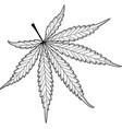cannabis cannabis leaf vector image vector image