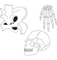 collection human skeleton eps 10 vector image vector image