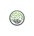 family tree symbol icon logo design vector image