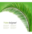 Nature background with a palm leaf vector image vector image