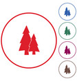 fir trees forest vector image
