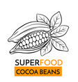 icon superfood cocoa beans vector image vector image