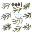 Spruce branches with Pine cones set vector image