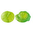 cabbages on white background vector image vector image