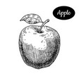hand drawn sketch style fresh apple vector image vector image