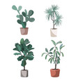 indoor houseplants potted home plants vector image