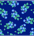 blue morning glory on navy blue background vector image