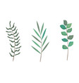 branch with leafs set styles icons vector image