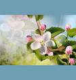 cherry flowers background beautiful spring vector image