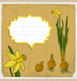 narcissus flower background vector image vector image