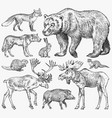set of wild animals brown grizzly bear forest vector image