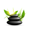 Stack of spa stones with grass and sunshine vector image vector image
