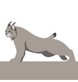 lynx flat style profile side vector image