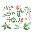 Red Berries Branches Fir and Leaves vector image vector image