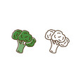 set color and monochrome broccoli icon vector image