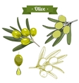 Set of green olives 1 vector image vector image