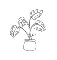 single continuous line drawing tropical monstera vector image vector image