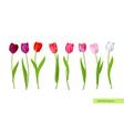 big isolated tulips flowers set vector image vector image
