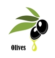 Ripe black olives on a leafy twig with oil vector image vector image