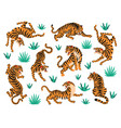 set of tigers and tropical leaves trendy vector image