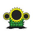 sunflowers stems with leaves on a white isolated vector image vector image