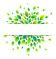 white paper stripe banner on green summer leaves vector image vector image